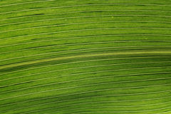 Leaf close up Royalty Free Stock Photography