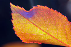 Leaf close up Royalty Free Stock Photos