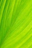 Leaf close-up Stock Image
