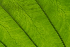 Leaf: Close Up Stock Photography