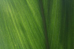 Free Leaf: Close Up Stock Images - 3635574