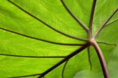 Leaf close up Stock Images