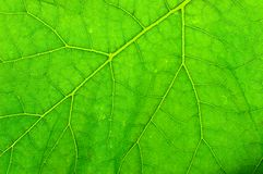 Leaf close-up royalty free stock photography