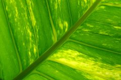Leaf. Close up Royalty Free Stock Photography
