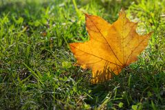 Leaf close-up. In autumn season Royalty Free Stock Photography