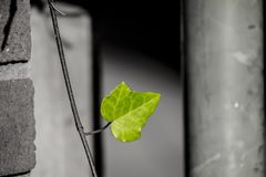 Leaf, Close Up, Black And White, Branch Royalty Free Stock Images