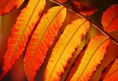 Leaf. Close-up of colorful autumn leaves stock photo