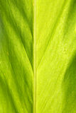 Leaf close-up Royalty Free Stock Images