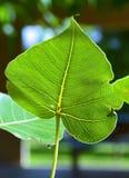 Leaf Close up Stock Image
