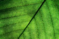 Leaf close up Stock Photos