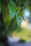 Leaf. Close Up & texture Of Leaf Stock Images