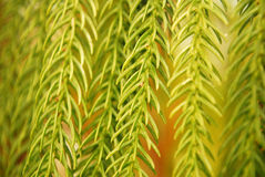 Leaf closeup Royalty Free Stock Photography