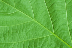 Leaf closeup Stock Photo
