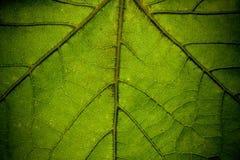 Leaf Closeup stock photos