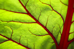 Leaf closeup. Stock Images