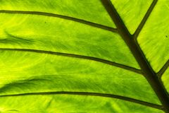 Leaf Closeup Royalty Free Stock Photos