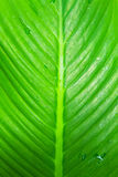 Leaf Closeup royalty free stock images