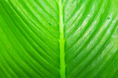 Leaf Closeup stock photography