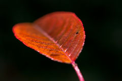 Leaf closeup Royalty Free Stock Photo