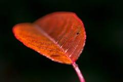 Leaf closeup royalty free stock photo