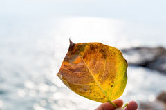A leaf closeup with sea Royalty Free Stock Images