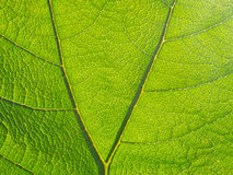 Leaf closeup Royalty Free Stock Image