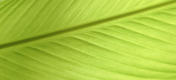 Leaf closeup texture Royalty Free Stock Images