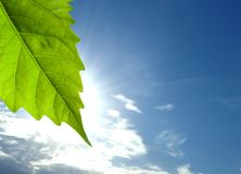 Leaf and clouds. A leaf bathes in sunlight. In the background blue sky, and clouds stock photography