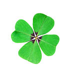 Leaf clover Royalty Free Stock Photo