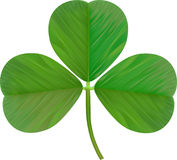 Leaf Clover. On a white background. Vector Illustration Stock Photos