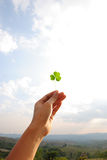 Leaf Clover Love Stock Image