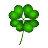 Leaf clover Royalty Free Stock Images