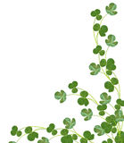Leaf clover on white background Stock Photos