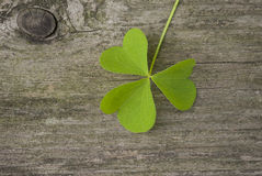 Leaf clover. On wooden board Stock Photo