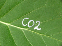 Leaf and CO2 Stock Image