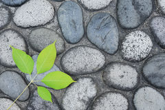 Leaf with cobblestone road Stock Image