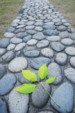 Leaf and cobblestone road Royalty Free Stock Photography