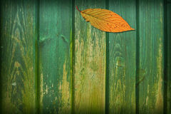 Leaf Collage. Variations on a leaf collage with a grunge wood texture stock photography