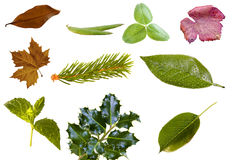 Leaf collection Stock Image