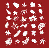 Leaf collection Royalty Free Stock Image