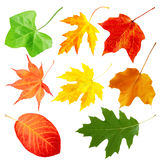 Leaf Collection Royalty Free Stock Photos