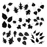 Leaf, collection for designers Royalty Free Stock Photo