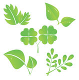 Leaf collection. Set of green leaves design elements.  vector illustration Royalty Free Stock Photos