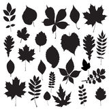 Leaf collection -  silhouette Royalty Free Stock Photography