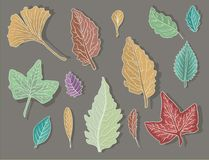 Leaf Collection Stock Images