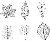 Leaf collection vector Royalty Free Stock Photography