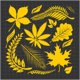 Leaf collection - vector set Stock Image