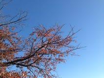 Leaf color change Stock Images
