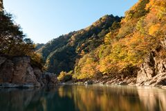 Leaf color change in Japan Autumn at Ryuokyo Canyon royalty free stock photos