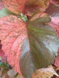 leaf color pattern stock image